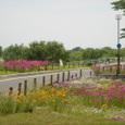 070523_flower_road_032